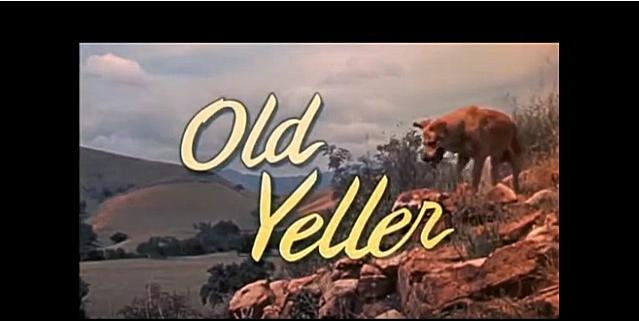 Old Yeller via Jason Flood YouTube