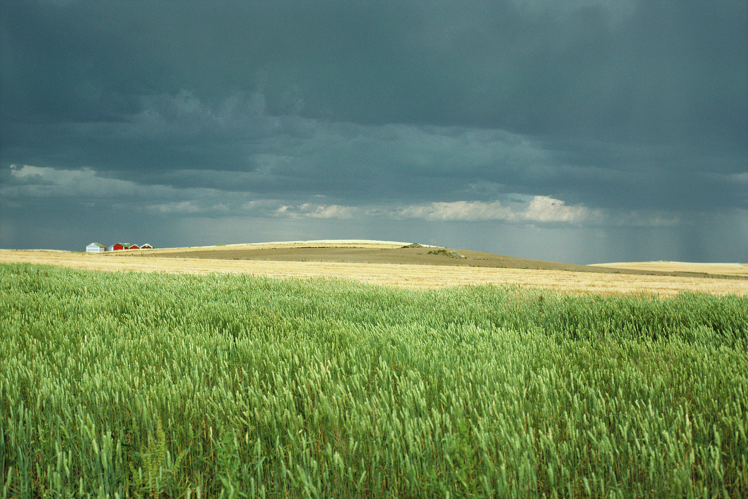 Crop with Rain Clouds